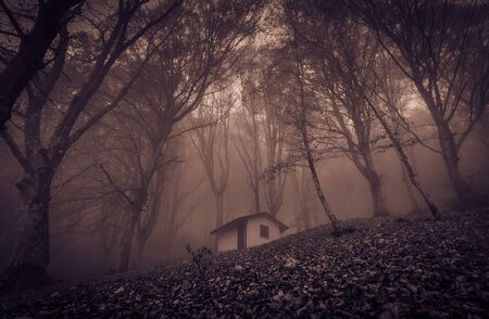 Photo pour View of small abandoned haunted house in the enchanted wood with fog - image libre de droit