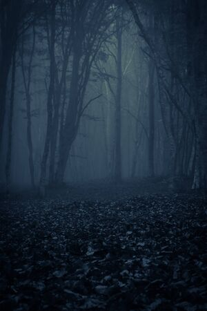 Photo for View of dark forest with fog, photo taken in Transylvania, Romania - Royalty Free Image