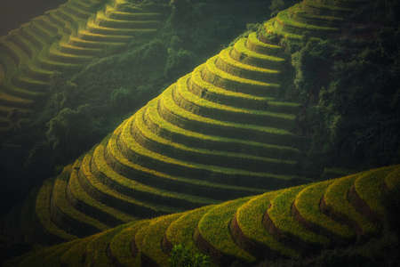 Vietnam Rice fields on terraced in rainy season at Mu cang chai, Vietnam. Rice fields prepare for transplant at Northwest Vietnam