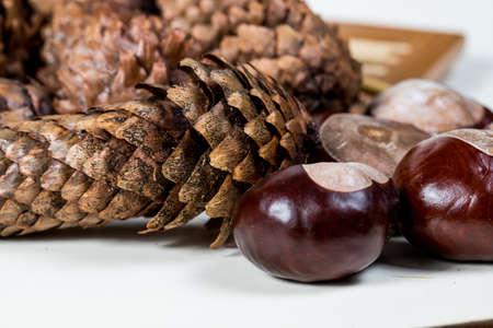 Foto de fir cones with chestnuts on a white background - Imagen libre de derechos