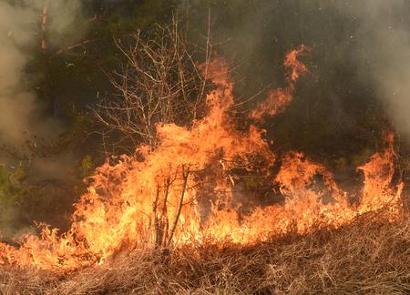 Photo pour wildfire, forest fire, burning forest - image libre de droit