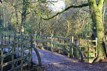 Wooden bridge crossing stream in one hundred acre wood in England