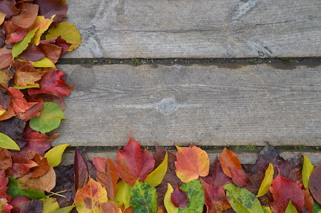 border of colorful fall leaves on an old wooden planks