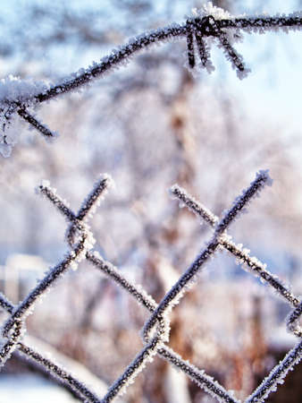 Frosted wire fence with a  barbed wires closeup with soft background