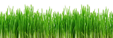 Seamless fresh spring green grass isolated on ᅵ white background