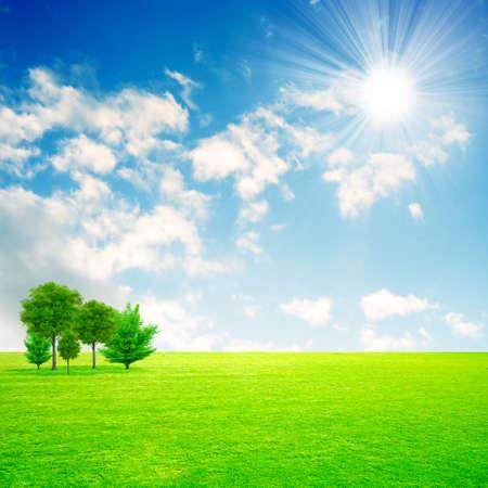 green meadow under beautiful solar sky