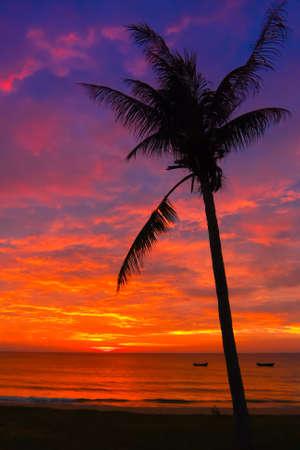 Brilliant Palm Tree Sunset