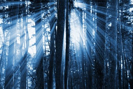 sunset in the dark forest for you design