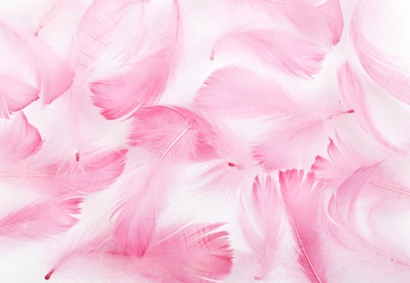delicate pink feathers on a white background