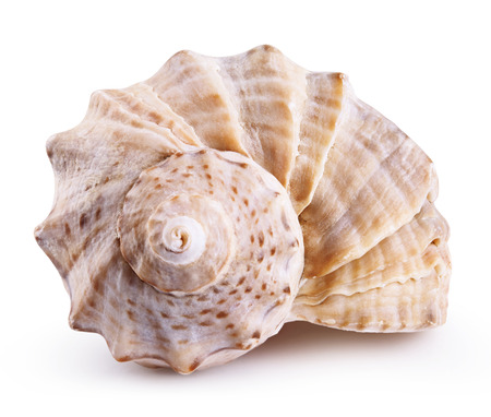 Photo for Sea shell isolated on a white background. Clipping Path - Royalty Free Image
