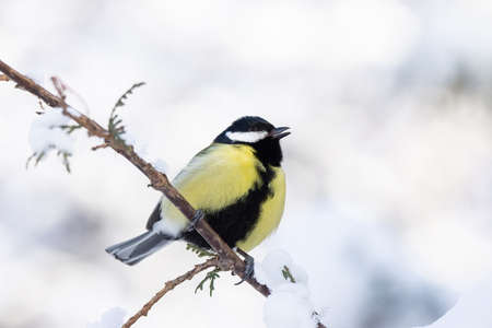 Foto per tit sitting on a branch in winter Park snow - Immagine Royalty Free