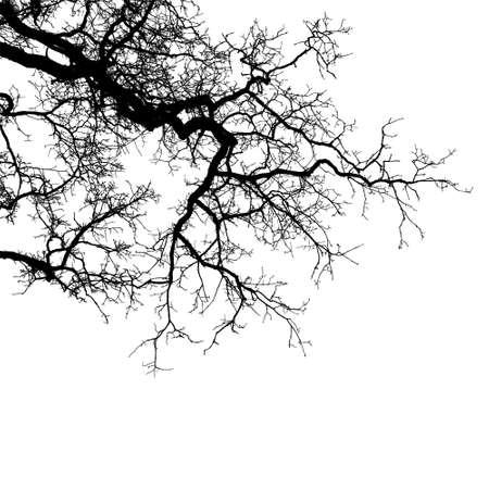 Ilustración de Realistic tree branches silhouette (Vector illustration) .Eps10 - Imagen libre de derechos