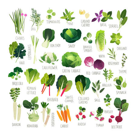 Illustration for Big clip art collection with various kind of vegetables and common culinary herbs - Royalty Free Image