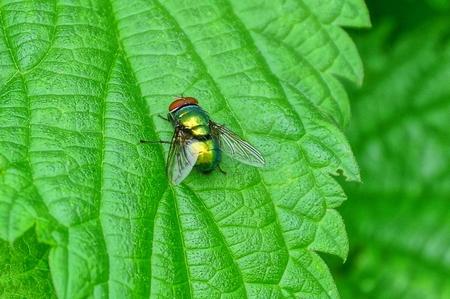 Photo pour one little fly sits in green - image libre de droit
