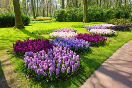Photo pour The Keukenhof is a popular flower garden which is visited by a million tourists from all around the world. It is open for only six weeks every year. - image libre de droit