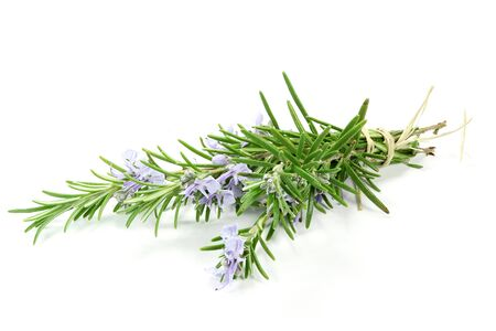Photo for bunch of rosemary isolated on white background - Royalty Free Image