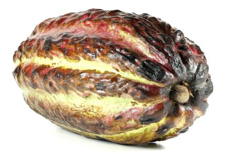cacao fruit isolated on white background