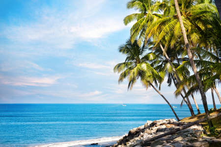 Photo pour Coconut palms on the beach near the blue ocean in Varkala, Kerala, India - image libre de droit