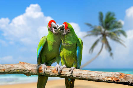 Parrot (Severe Macaw) on the white sand beach white blue sky