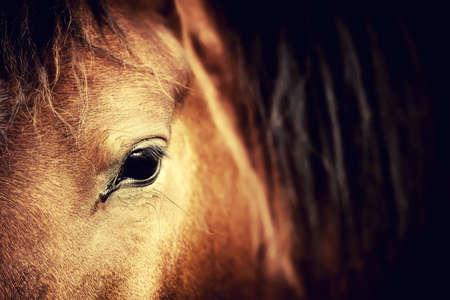 Photo pour Close-up eye of Arabian bay horse on dark - image libre de droit