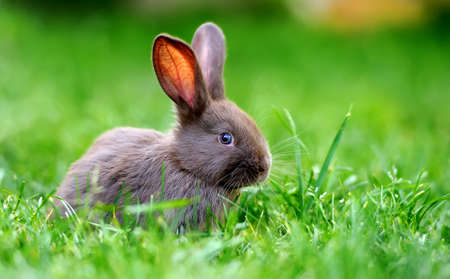 Foto de Little rabbit on green grass in summer day - Imagen libre de derechos