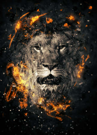Lion portrait in fire on black background