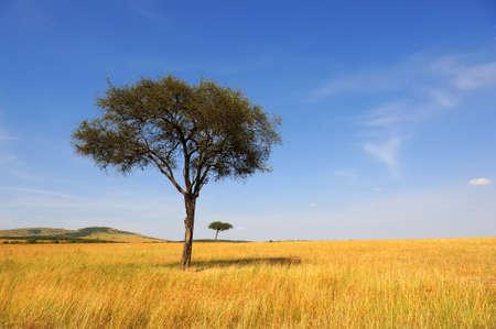 Photo pour Beautiful landscape with tree in Africa - image libre de droit