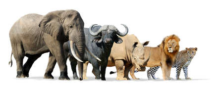 Photo pour Big five game isolated on white - Lion, Elephant, Leopard, Buffalo and Rhinoceros - image libre de droit