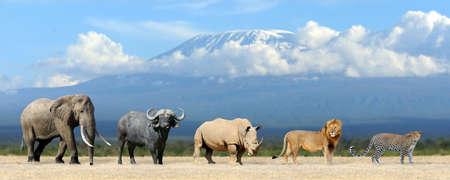 Photo pour Big five africa - Lion, Elephant, Leopard, Buffalo and Rhinoceros - image libre de droit