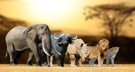 Photo for Big five africa - Lion, Elephant, Leopard, Buffalo and Rhinoceros - Royalty Free Image