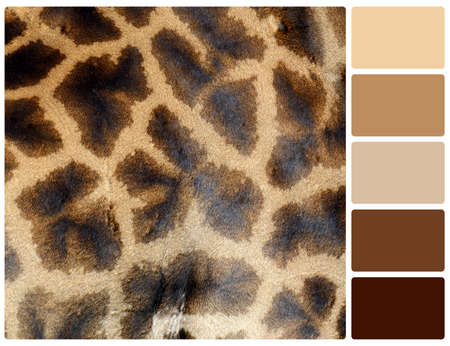 Giraffe skin texture. Colour palette with complimentary colour swatches