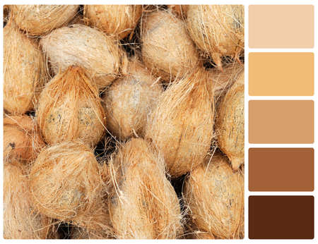 Coconut texture. Colour palette with complimentary colour swatches