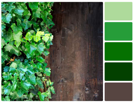 Close up brown wood wall with green leaves. Colour palette with complimentary colour swatches