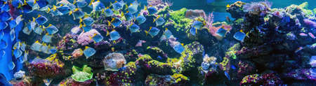 Photo pour Great underwater world fish in aquarium - image libre de droit