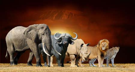 Photo pour Close big five on savanna landscape background and Mount Kilimanjaro at sunset - image libre de droit