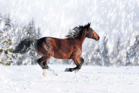 Photo pour Horse in a snow on winter background. New Year card.  - image libre de droit