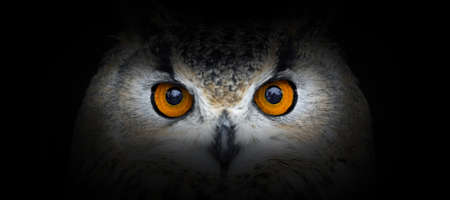 Photo pour Owl portrait on a black background. View from the darkness - image libre de droit