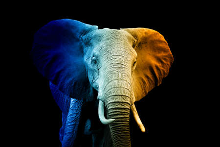 Photo for Close up portrait of elephant in a hot and cold shade - Royalty Free Image