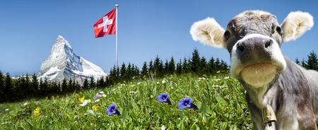 Photo pour Matterhorn with cow - image libre de droit