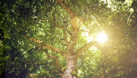 Photo pour Sunlight in a Tree - image libre de droit