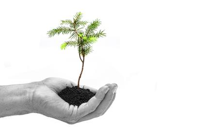 Photo pour New Plant in Hand - image libre de droit