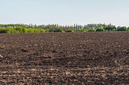 Photo pour Plowed Chernozemic soil (humus) field and tree planting line in Kyiv Region, Ukraine - image libre de droit