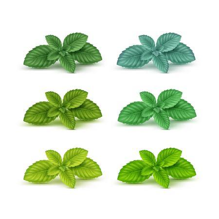 Illustration pour Vector Mint Spearmint Peppermint Leaf Leaves Set Isolated on White Background - image libre de droit