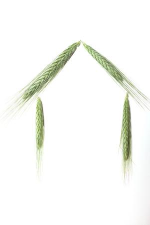 House made with barley