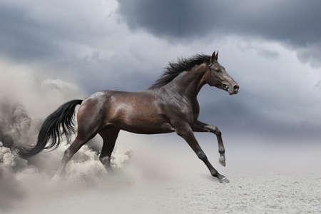 Photo pour Horse gallop in desert - image libre de droit