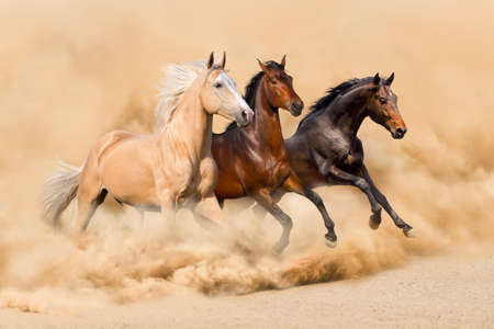 Photo pour Three horse run in desert sand storm - image libre de droit