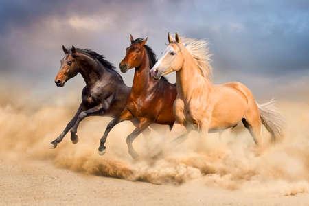 Photo pour Horse run - image libre de droit