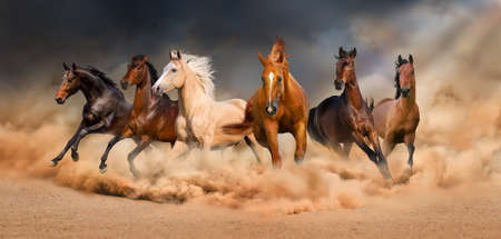 Photo pour Horse herd run in desert sand storm against  dramatic sky - image libre de droit