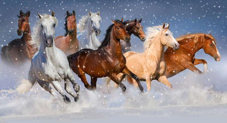 Photo pour Horse herd run fast in winter snow field - image libre de droit