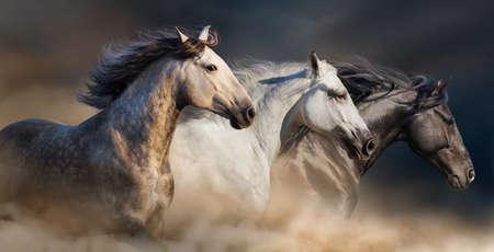 Horses with long mane portrait run gallop in desert dust